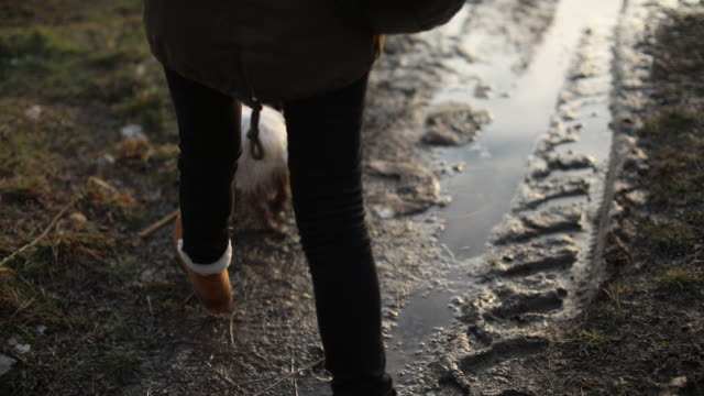 dirty dog being walked in winter - puddle stock videos & royalty-free footage
