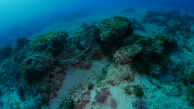Discarded fishing line wrapped around dead coral reef