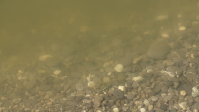 Discolored green water at shoreline of Lake Forsyth due to toxic algal bloom