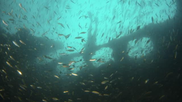 stockvideo's en b-roll-footage met discovering a sunken ship - scheepswrak