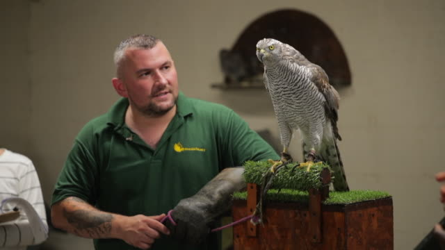 discussing the goshawk - zoo stock videos & royalty-free footage