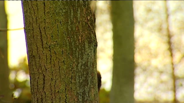 Disease threatens to devastate Britain's ash trees Potential solution T29101244 / TX Tree trunk PULL Leaves on tree branches