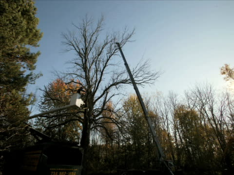 t/l ws diseased ash tree being dismantled and removed by crew using a cherry picker and crane / ann arbor, michigan - ash tree stock videos & royalty-free footage
