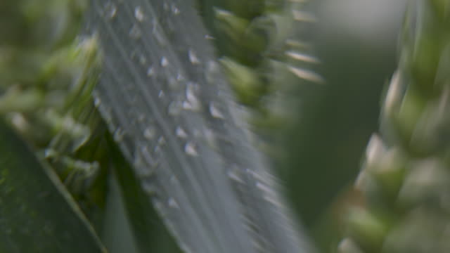 disorientating cu of water droplets on a blade grass - distorted stock videos & royalty-free footage