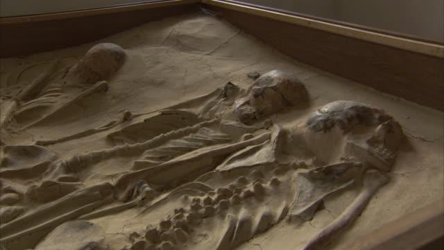 a display case holds fossilized skeletons in a museum in czech republic. - skåp med glasdörrar bildbanksvideor och videomaterial från bakom kulisserna
