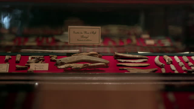 display cases in a museum housing ancient artefacts - 先史時代点の映像素材/bロール