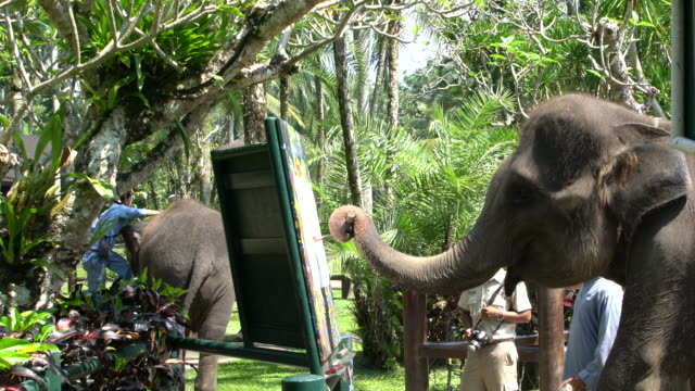 displays of rescued sumatran elephant intelligence in bali, indonesia - animal behaviour stock videos & royalty-free footage