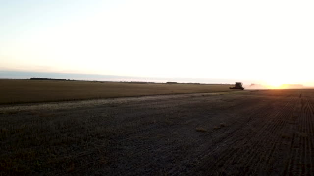 distant combine harvester at work during sunset - combine harvester stock videos and b-roll footage