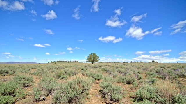 distant lone independent juniper tree under blue sky and puffy clouds in the desert with sagebrush south steens mountain near malheur national wildlife refuge - oregon us state stock videos & royalty-free footage