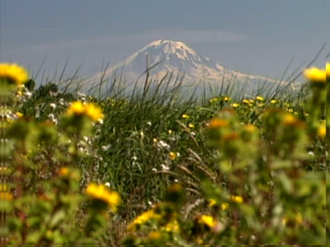 Distant mountain with foreground wildflowers