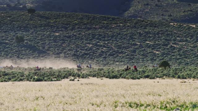 distant riders - attività equestre ricreativa video stock e b–roll