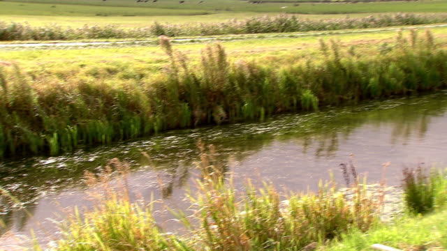 ditch in meadow, the netherlands - polder stock videos and b-roll footage