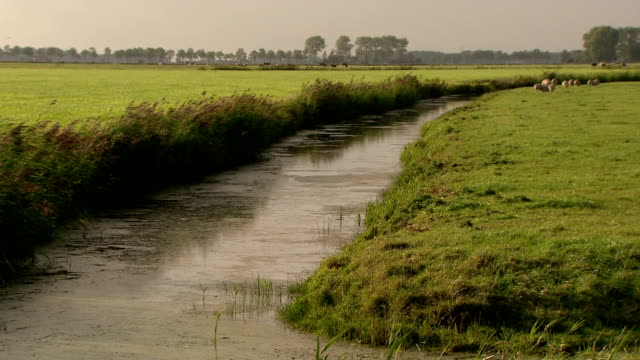 ditch in meadow - polder stock videos and b-roll footage