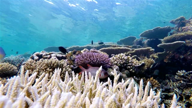 dive ride on coral reef - maldives / south ari atoll - ari atoll stock videos & royalty-free footage