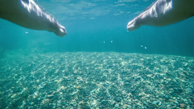 pov: dive underwater - human limb stock videos & royalty-free footage