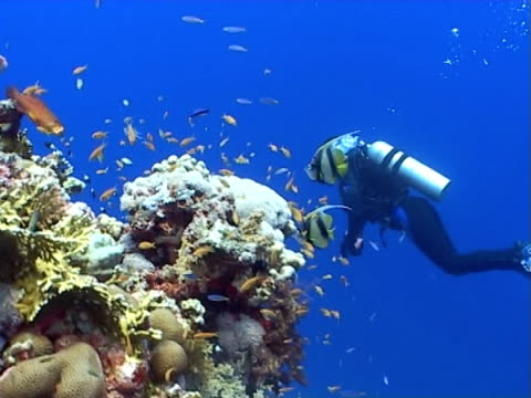 diver and range of fish species, strong sunlight, blue water - aqualung diving equipment stock-videos und b-roll-filmmaterial