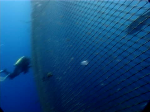 diver at tuna cage, tuna swimming inside cage, mediterranean sea. - trapped stock videos & royalty-free footage