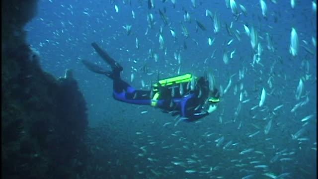 Diver descending to wreck with rebreather (no bubbles to disturb sharks). North Carolina, USA. Coastal Atlantic