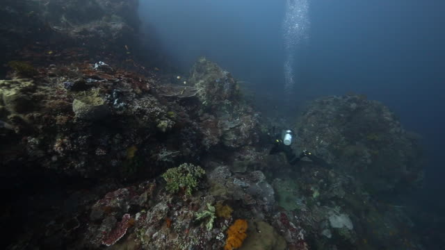 a diver descends along a coral reef, flores indonesia - seabed stock videos & royalty-free footage