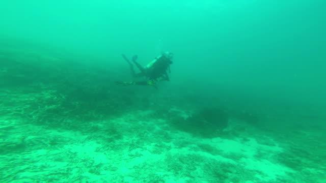 ダイバーに美しい珊瑚礁ダイビング - グラスフィッシュ点の映像素材/bロール