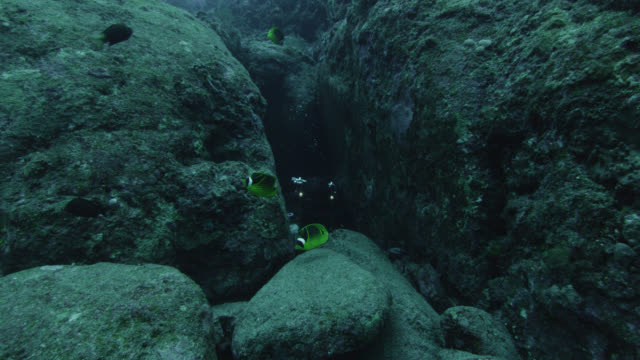 stockvideo's en b-roll-footage met diver emerges from crevice near raccoon butterflyfish (chaetodon lunula). japan - crevice