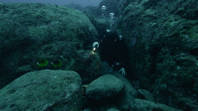 diver emerges from crevice near raccoon butterflyfish (chaetodon lunula). japan - monument stock videos & royalty-free footage