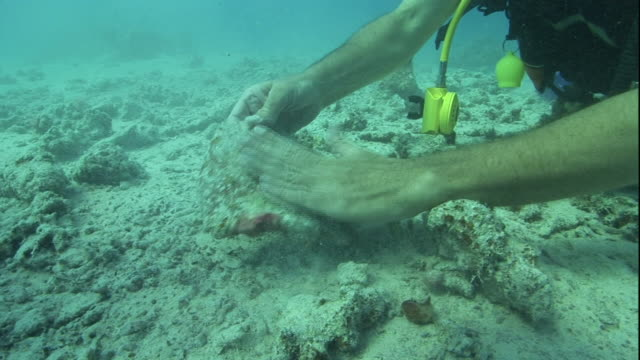 A diver examines an artifact at the bottom of the Red Sea.