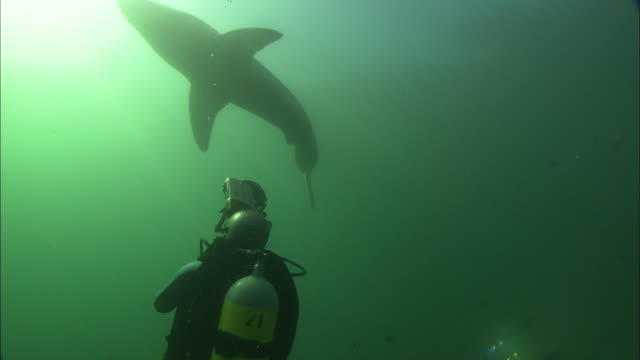diver filming white shark,  south africa, gansbaai  - aqualung diving equipment stock videos & royalty-free footage