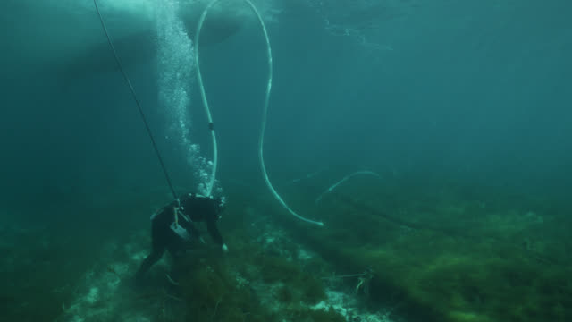 diver harvests seaweed from ranks of netting using suction device. japan. - algae stock videos & royalty-free footage