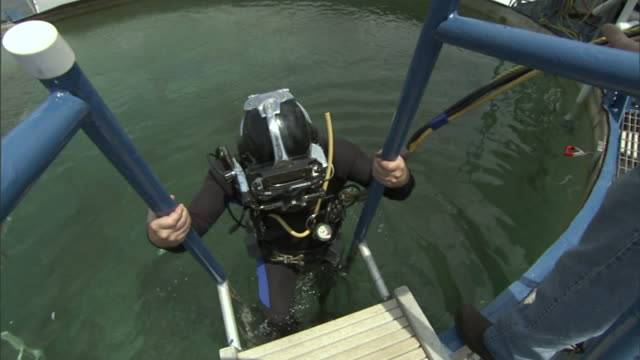 a diver in scuba gear descends a ladder into a diving tank. - tauchgerät stock-videos und b-roll-filmmaterial