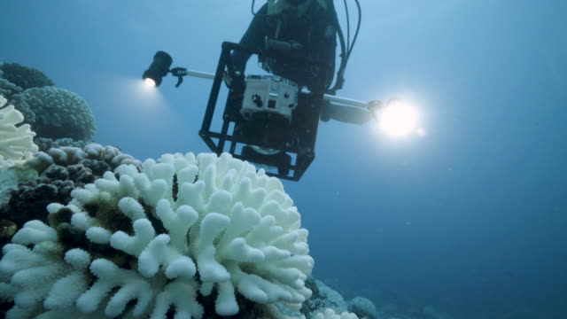 diver looks at the coral reefs of the society islands in french polynesia. on may 9, 2019 in moorea, french polynesia. major bleaching is currently... - coral stock videos & royalty-free footage