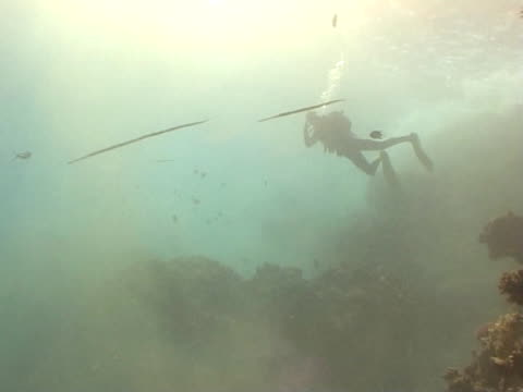 diver near surface silhouette with pipe fish swimming closer ws - ヨウジウオ科点の映像素材/bロール