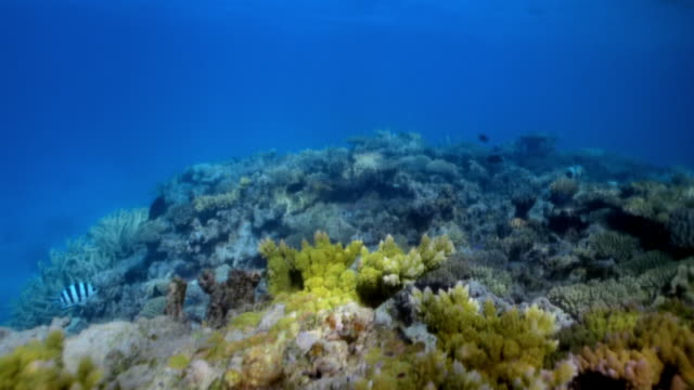 pov diver on coral reef, french guiana - french guiana stock videos & royalty-free footage