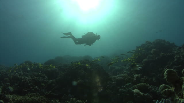 diver over reef in sunlight, red sea, egypt - aqualung diving equipment stock videos & royalty-free footage
