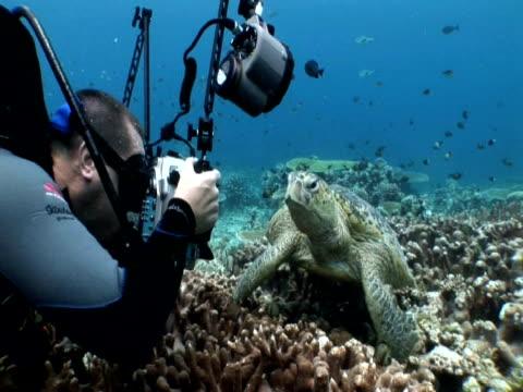 stockvideo's en b-roll-footage met diver photographing green turtle (chelonia mydas), sipadan, malaysia, borneo - ernstig bedreigde soorten