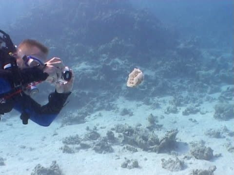 diver ws photographing jellyfish - tauchgerät stock-videos und b-roll-filmmaterial