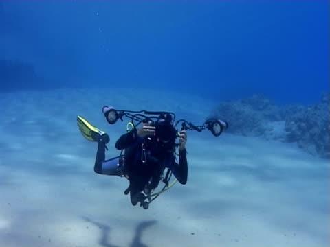 diver photographs underwater. red sea - stechrochen stock-videos und b-roll-filmmaterial