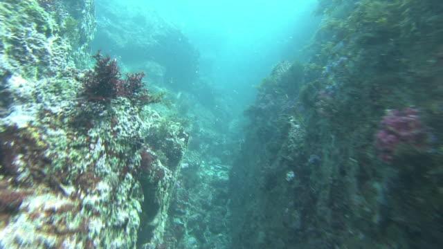 vídeos y material grabado en eventos de stock de diver point of view underwater shot swimming between large rocks various underwater sea plants growing from rocks - fondo turquesa