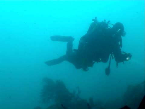 diver swim over kelp - tauchgerät stock-videos und b-roll-filmmaterial