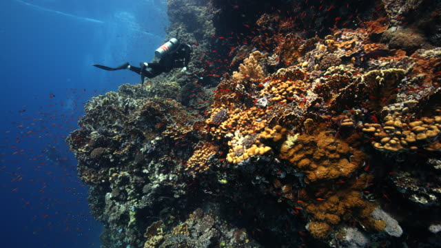 A diver swimming along a coral reef wall