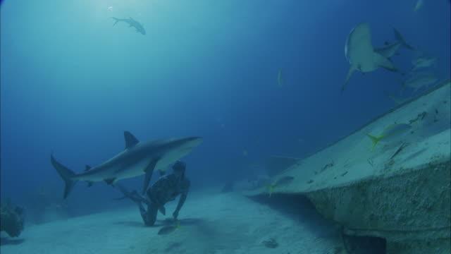 vidéos et rushes de slo mo ws diver swimming along ocean floor amongst fishes / moorea, tahiti, french polynesia - moorea