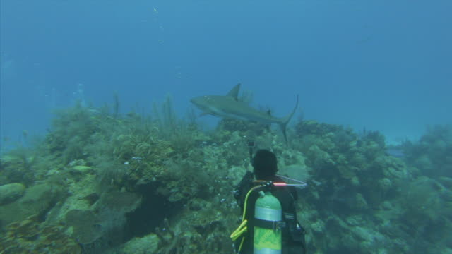diver swimming along shark over coral reef in blue sea, person scuba diving underwater - great blue hole, belize - underwater diving stock videos & royalty-free footage