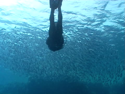 diver ws swimming in to shoal of fish - medium group of animals stock videos & royalty-free footage
