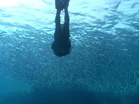 vidéos et rushes de diver ws swimming in to shoal of fish - groupe moyen d'animaux