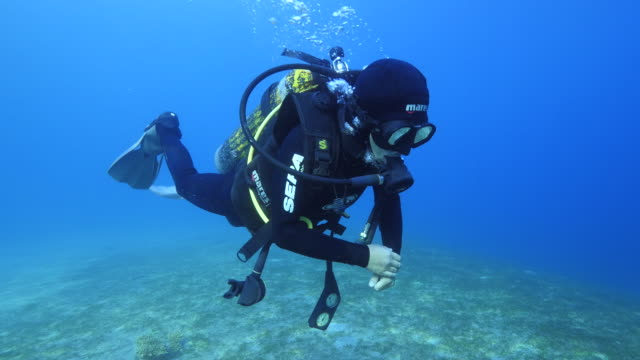 diver swimming underwater - red sea stock videos & royalty-free footage