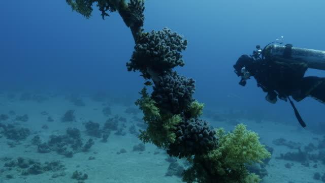 vídeos y material grabado en eventos de stock de diver swimming - lanzarse al agua