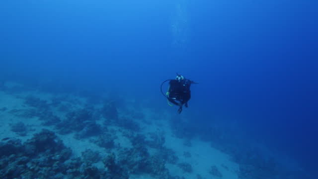 diver swimming - red sea stock videos & royalty-free footage