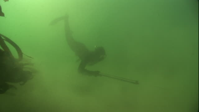 a diver swims in murky water between swaying kelp. - dark stock videos & royalty-free footage
