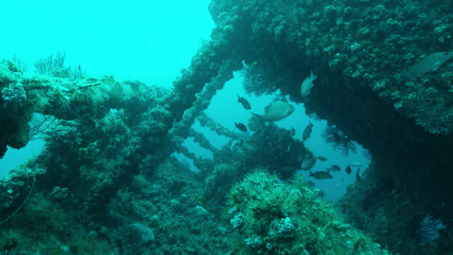 pov diver swims over shipwreck, florida, usa - grunzer stock-videos und b-roll-filmmaterial