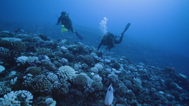 vídeos y material grabado en eventos de stock de diver takes a cutting from a coral suffering from major bleaching on the coral reefs of the society islands on may 9, 2019 in moorea, french... - equipo de buceo